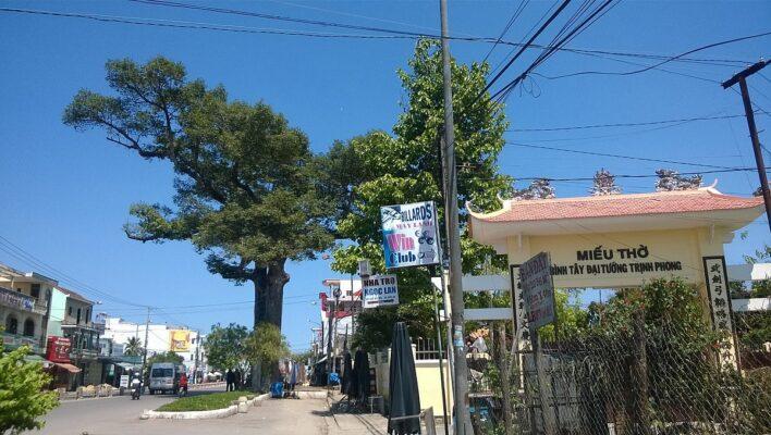1200px Cay dau doi Dien Khanh Khanh Hoa